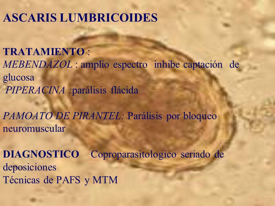 ASCARIS LUMBRICOIDES TRATAMIENTO : MEBENDAZOL : amplio espectro inhibe captación de glucosa PIPERACINA :parálisis flácida PAMOATO DE PIRANTEL: Parális