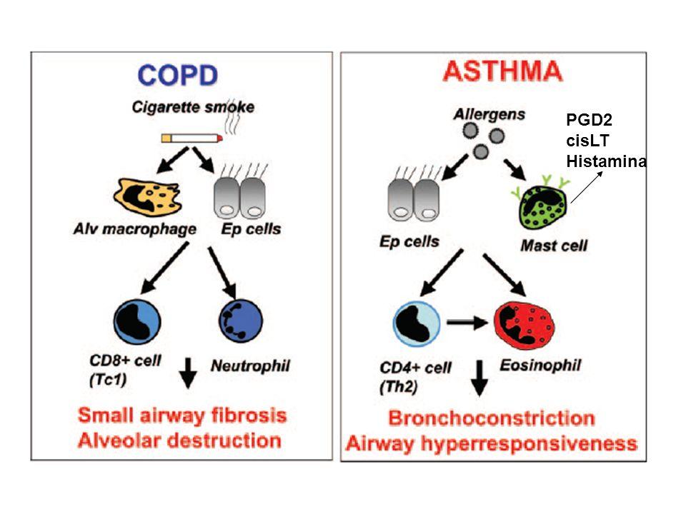 PGD2 cisLT Histamina