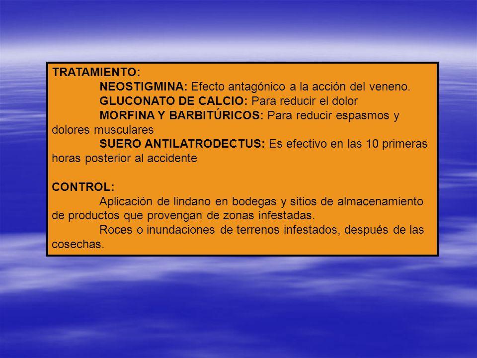 TRATAMIENTO: NEOSTIGMINA: Efecto antagónico a la acción del veneno. GLUCONATO DE CALCIO: Para reducir el dolor MORFINA Y BARBITÚRICOS: Para reducir es