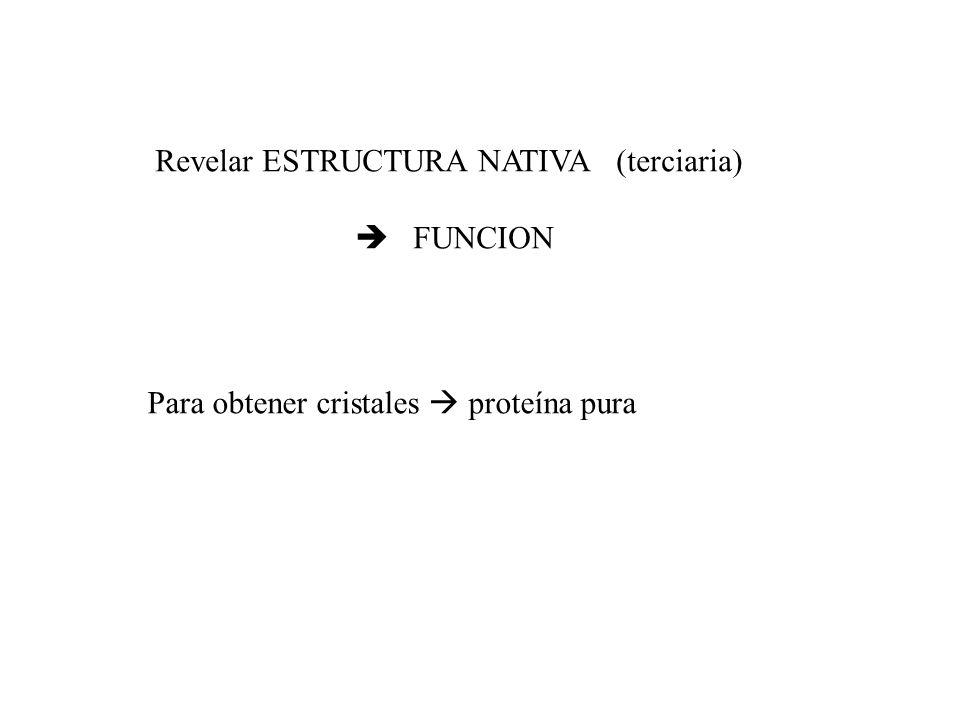 Revelar ESTRUCTURA NATIVA (terciaria) FUNCION Para obtener cristales proteína pura