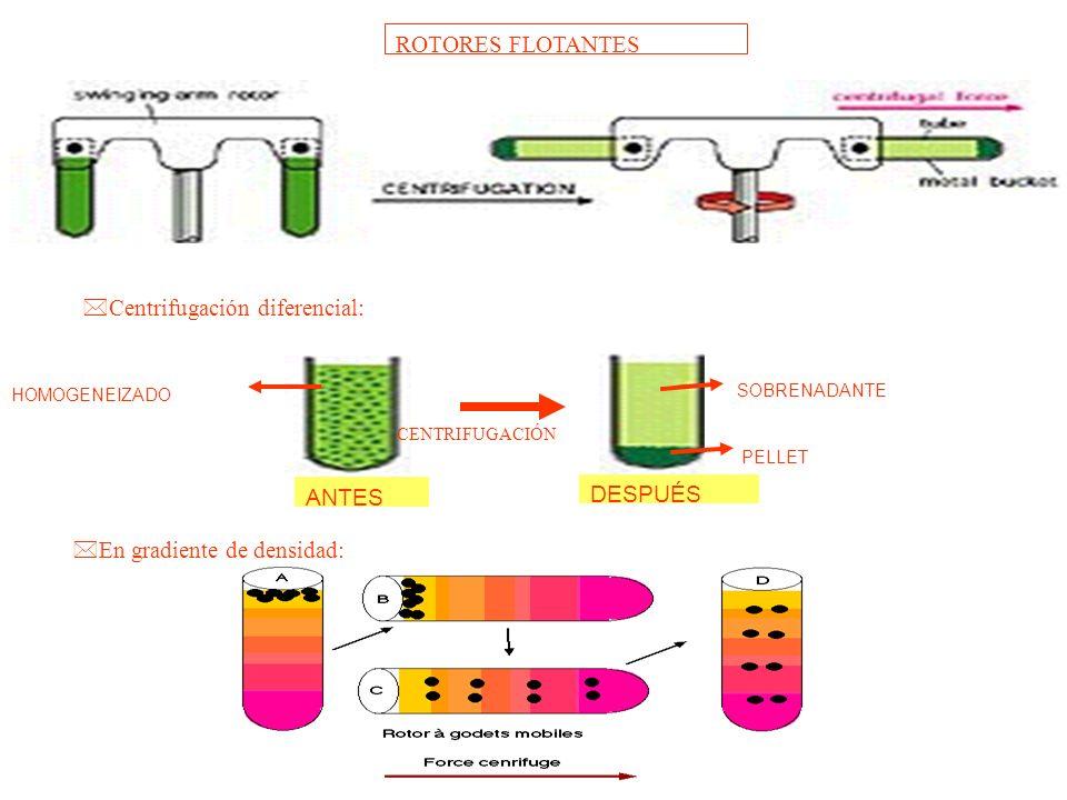 ROTORES FLOTANTES DESPUÉS PELLET SOBRENADANTE ANTES HOMOGENEIZADO CENTRIFUGACIÓN *En gradiente de densidad: *Centrifugación diferencial:
