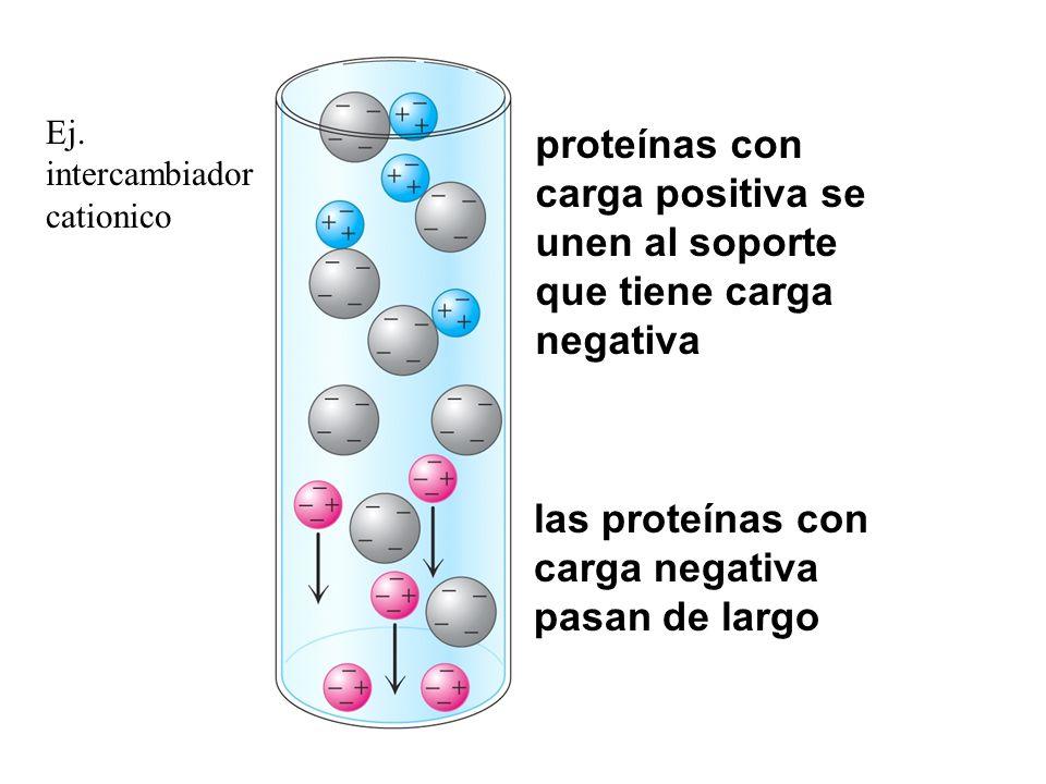 proteínas con carga positiva se unen al soporte que tiene carga negativa las proteínas con carga negativa pasan de largo Ej. intercambiador cationico