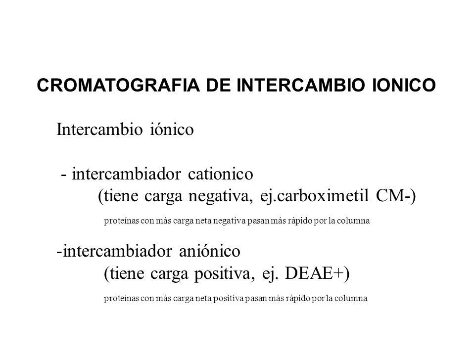 CROMATOGRAFIA DE INTERCAMBIO IONICO Intercambio iónico - intercambiador cationico (tiene carga negativa, ej.carboximetil CM-) proteínas con más carga
