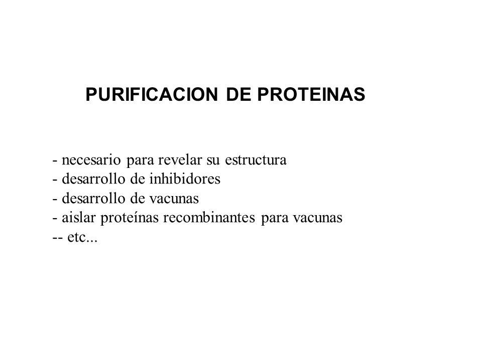 PURIFICACION DE PROTEINAS - necesario para revelar su estructura - desarrollo de inhibidores - desarrollo de vacunas - aislar proteínas recombinantes