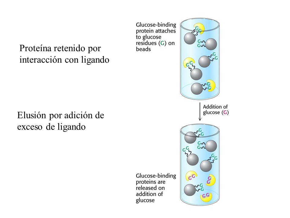 Proteína retenido por interacción con ligando Elusión por adición de exceso de ligando