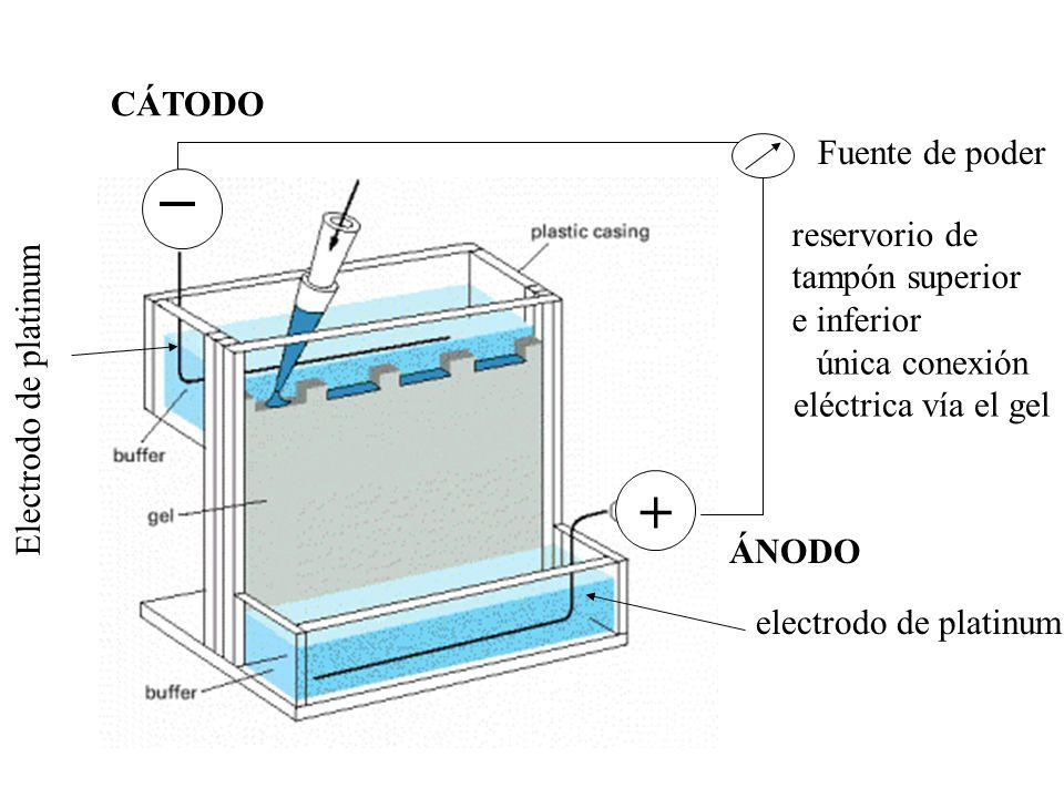 Fuente de poder electrodo de platinum reservorio de tampón superior e inferior única conexión eléctrica vía el gel Electrodo de platinum + CÁTODO ÁNOD