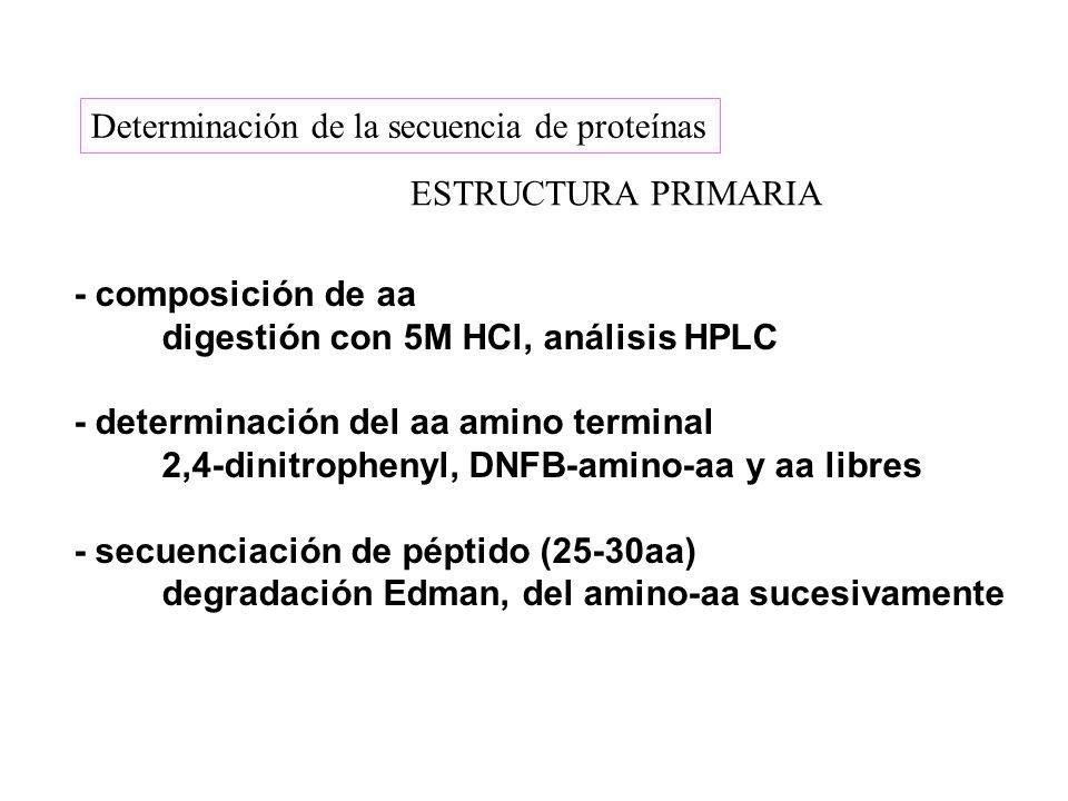 Determinación de la secuencia de proteínas ESTRUCTURA PRIMARIA - composición de aa digestión con 5M HCl, análisis HPLC - determinación del aa amino te