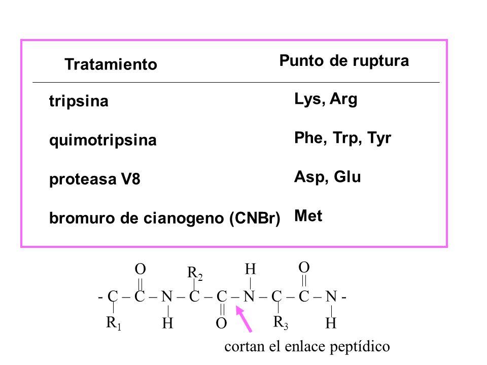 Tratamiento Punto de ruptura tripsina quimotripsina proteasa V8 bromuro de cianogeno (CNBr) Lys, Arg Phe, Trp, Tyr Asp, Glu Met - C – C – N – C – C –