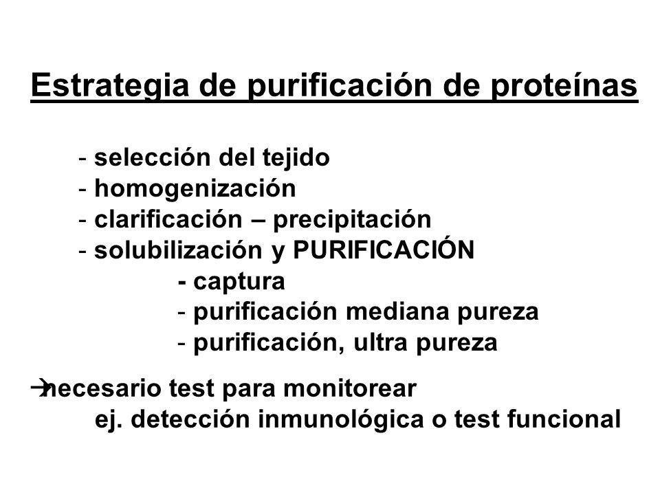 Estrategia de purificación de proteínas - selección del tejido - homogenización - clarificación – precipitación - solubilización y PURIFICACIÓN - capt
