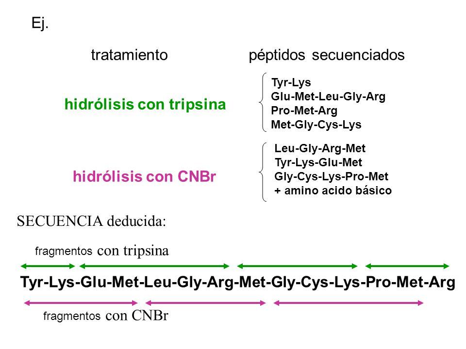 tratamiento Ej. péptidos secuenciados Tyr-Lys Glu-Met-Leu-Gly-Arg Pro-Met-Arg Met-Gly-Cys-Lys Leu-Gly-Arg-Met Tyr-Lys-Glu-Met Gly-Cys-Lys-Pro-Met + am