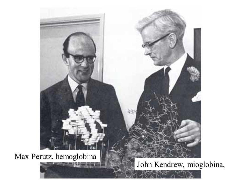 John Kendrew, mioglobina, Max Perutz, hemoglobina