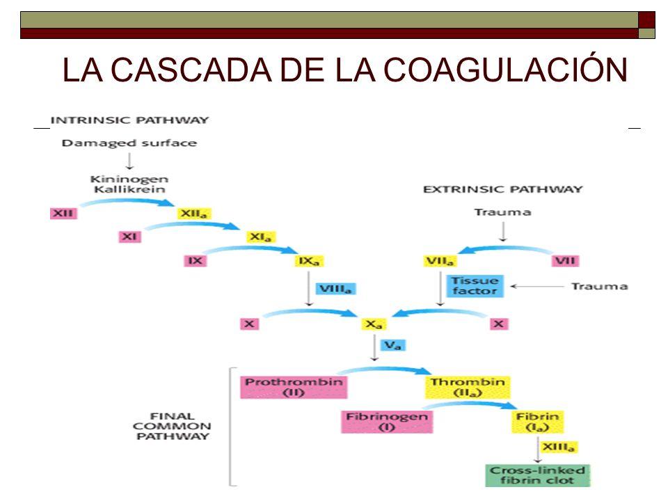 LA CASCADA DE LA COAGULACIÓN