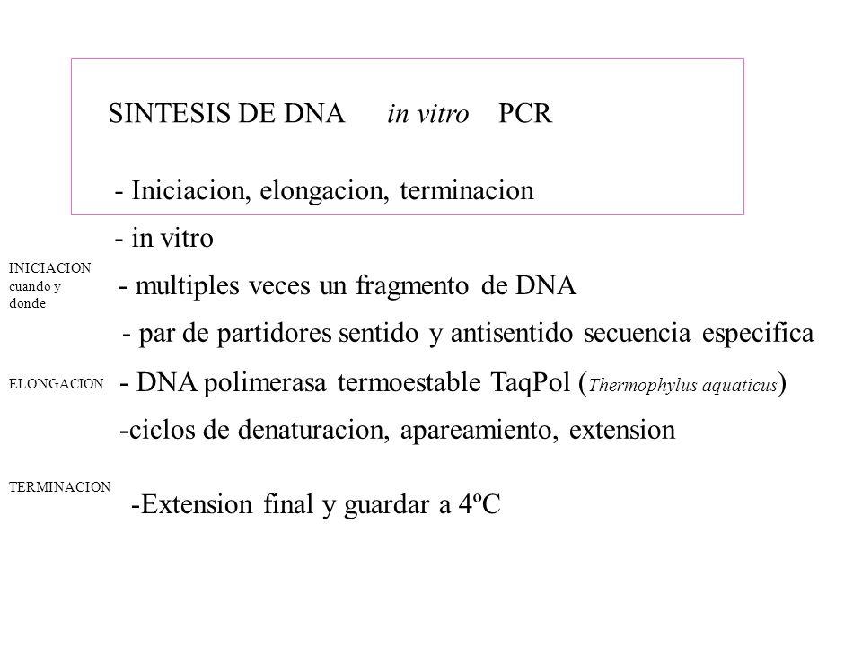 SINTESIS DE DNA in vitro PCR - Iniciacion, elongacion, terminacion - par de partidores sentido y antisentido secuencia especifica - in vitro - multipl