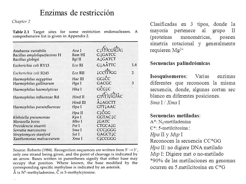 Enzimas de restricción Clasificadas en 3 tipos, donde la mayoría pertenece al grupo II (proteínas monoméricas, poseen simetria rotacional y generalmen