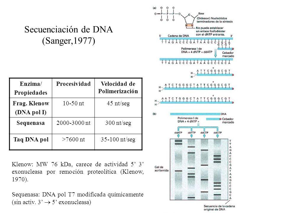 Secuenciación de DNA (Sanger,1977) Enzima/ Propiedades ProcesividadVelocidad de Polimerización Frag. Klenow (DNA pol I) 10-50 nt45 nt/seg Sequenasa200