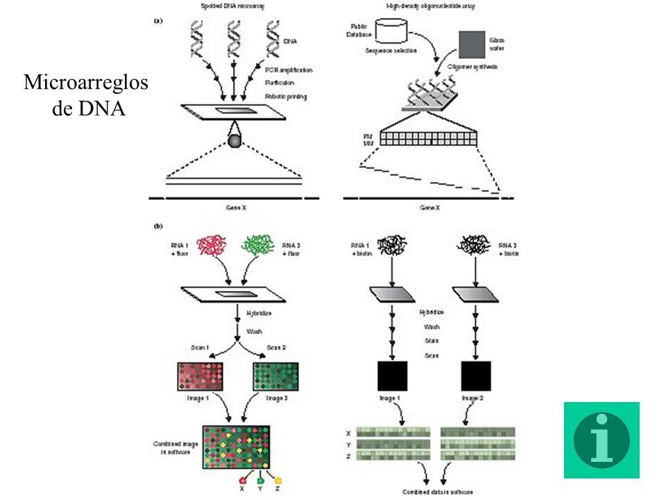 Microarreglos de DNA