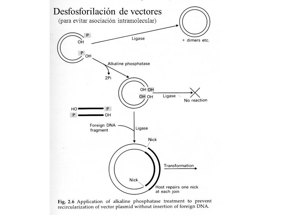 DNA Ligasa 68 kDa Actividad se mide en Unidase Weiss (Weiss, 1968)