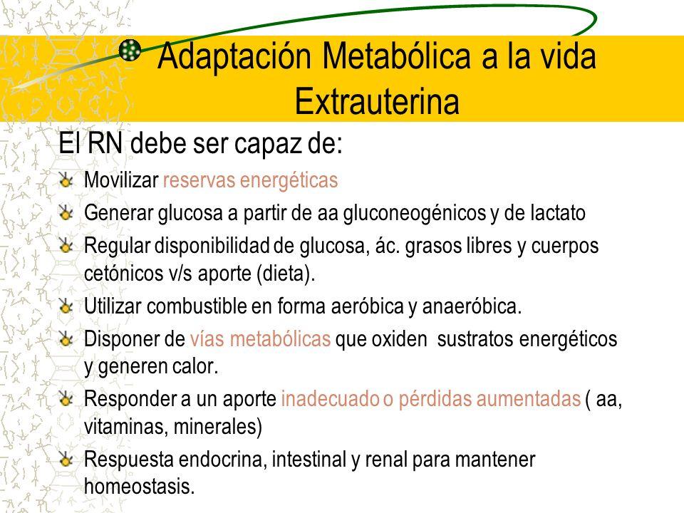 Adaptación Metabólica a la vida Extrauterina El RN debe ser capaz de: Movilizar reservas energéticas Generar glucosa a partir de aa gluconeogénicos y