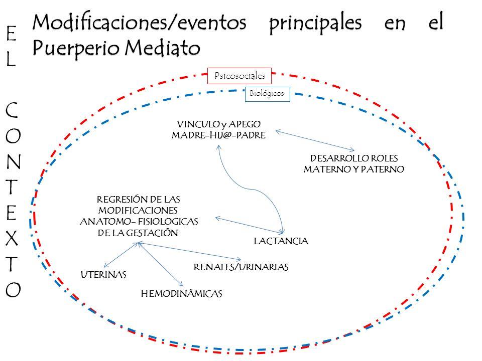 Modificaciones/eventos principales en el Puerperio Mediato LACTANCIA VINCULO y APEGO MADRE-HIJ@-PADRE REGRESIÓN DE LAS MODIFICACIONES ANATOMO- FISIOLO