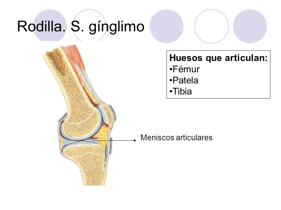 Rodilla. S. gínglimo Huesos que articulan: Fémur Patela Tibia Meniscos articulares