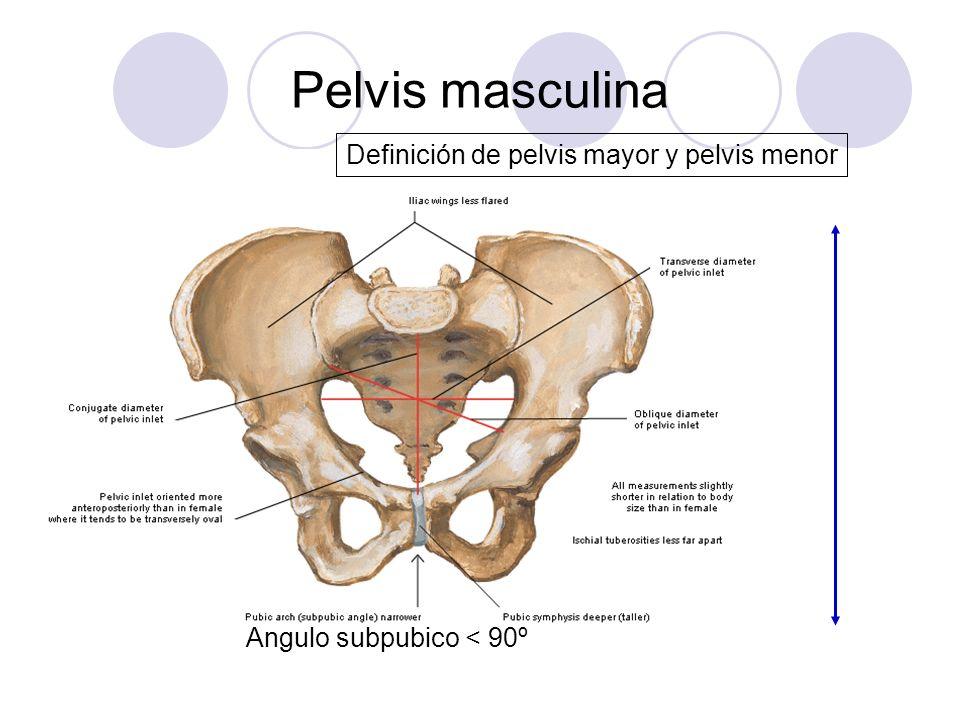 Pelvis masculina Definición de pelvis mayor y pelvis menor Angulo subpubico < 90º