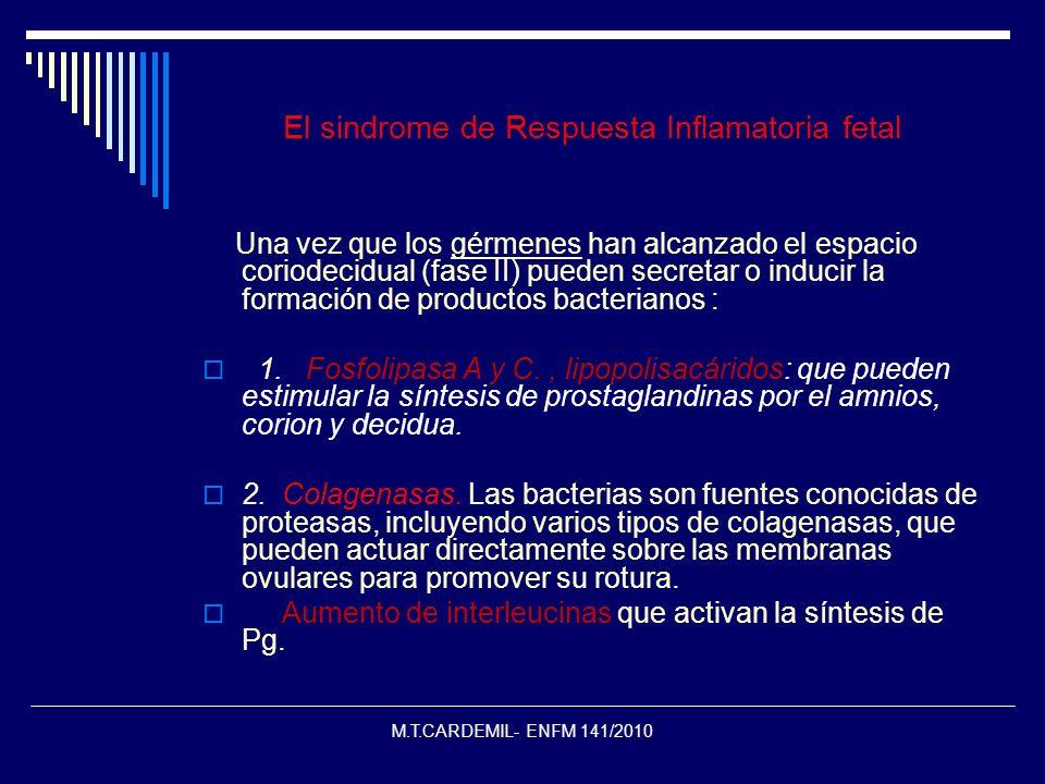 M.T.CARDEMIL- ENFM 141/2010 El sindrome de Respuesta Inflamatoria fetal Una vez que los gérmenes han alcanzado el espacio coriodecidual (fase II) pued