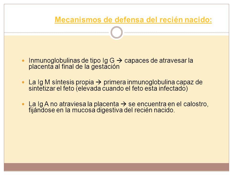 Mecanismos de defensa del recién nacido: Inmunoglobulinas de tipo Ig G capaces de atravesar la placenta al final de la gestación La Ig M síntesis prop