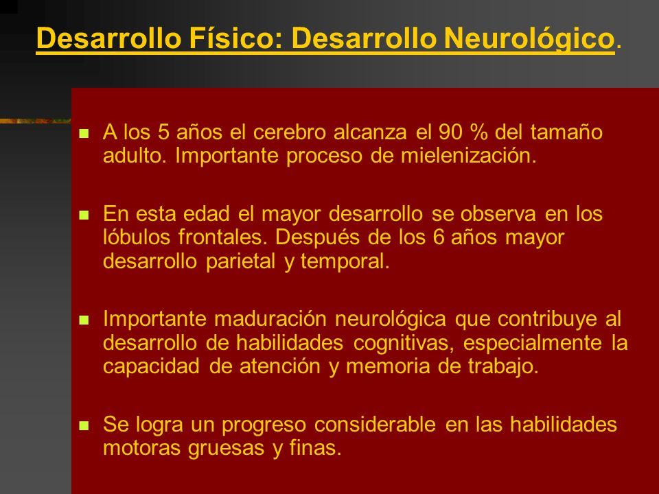 Desarrollo Físico: Desarrollo Neurológico. A los 5 años el cerebro alcanza el 90 % del tamaño adulto. Importante proceso de mielenización. En esta eda