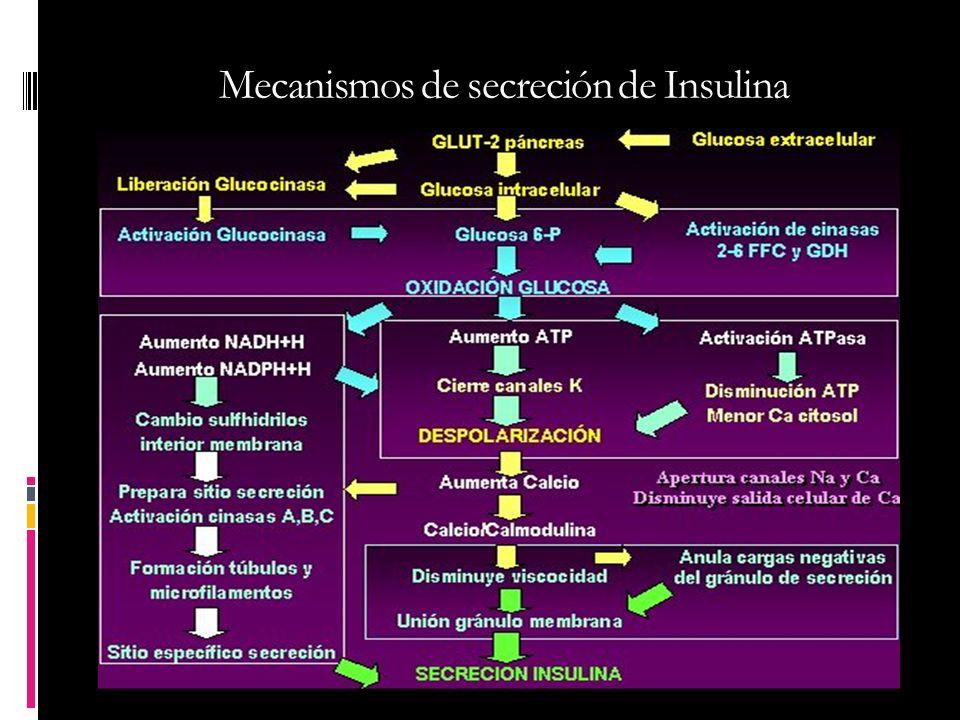 Mecanismos de secreción de Insulina