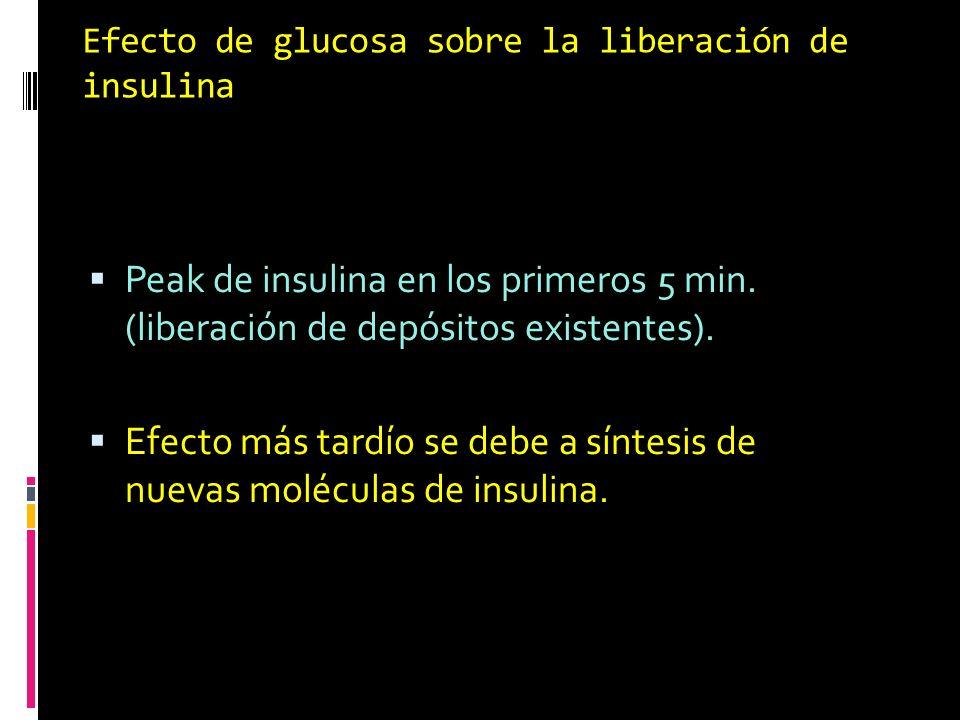 Efecto de glucosa sobre la liberación de insulina 2 Fases: Peak de insulina en los primeros 5 min. (liberación de depósitos existentes). Efecto más ta