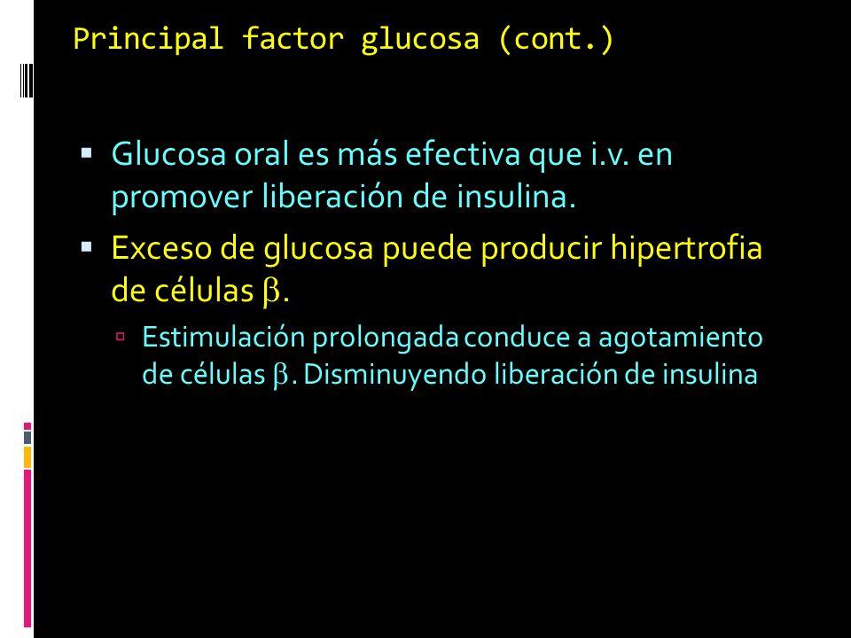 Principal factor glucosa (cont.) Glucosa oral es más efectiva que i.v. en promover liberación de insulina. Exceso de glucosa puede producir hipertrofi