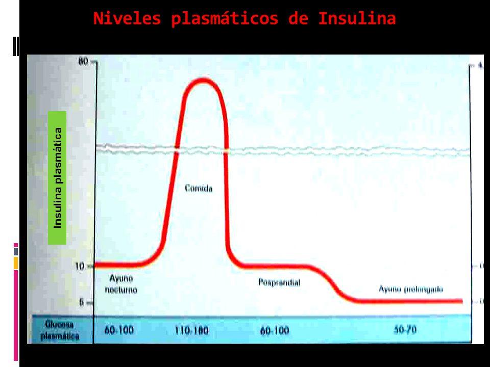 Niveles plasmáticos de Insulina Insulina plasmática