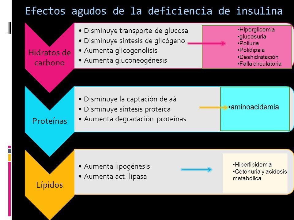 Efectos agudos de la deficiencia de insulina Hidratos de carbono Disminuye transporte de glucosa Disminuye síntesis de glicógeno Aumenta glicogenolisi