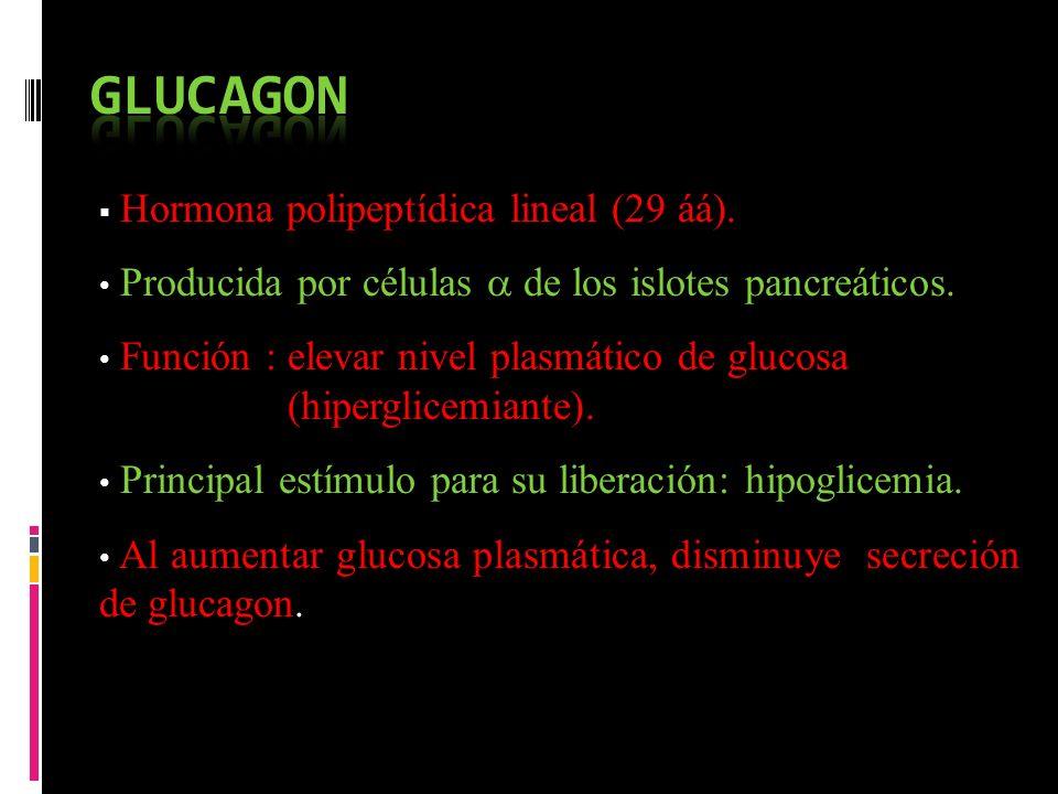 Hormona polipeptídica lineal (29 áá). Producida por células de los islotes pancreáticos. Función : elevar nivel plasmático de glucosa (hiperglicemiant