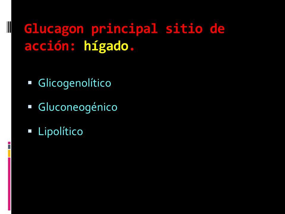 Glucagon principal sitio de acción: hígado. Glicogenolítico Gluconeogénico Lipolítico