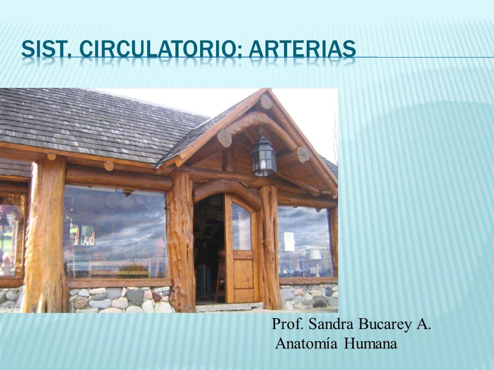 Prof. Sandra Bucarey A. Anatomía Humana
