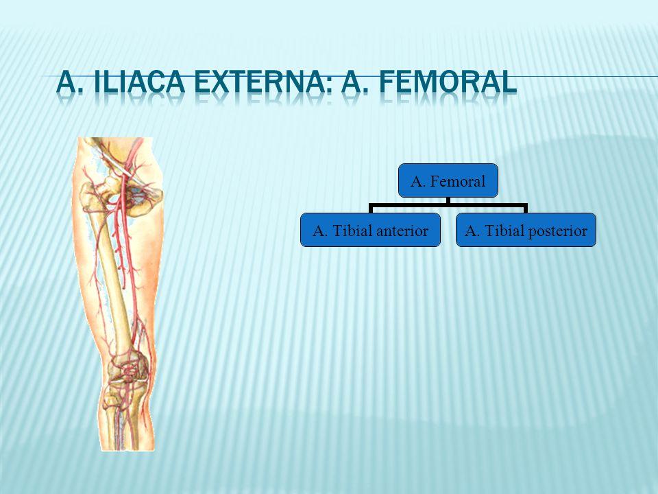 A. Femoral A. Tibial anterior A. Tibial posterior