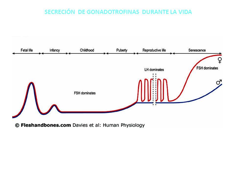 SECRECIÓN DE GONADOTROFINAS DURANTE LA VIDA