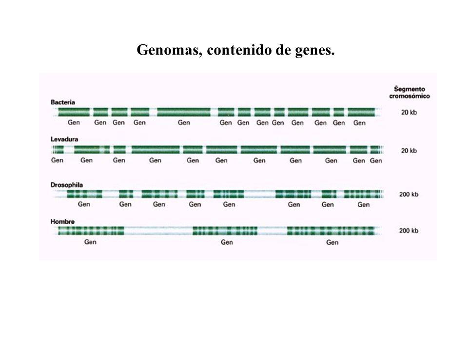 Genomas, contenido de genes.