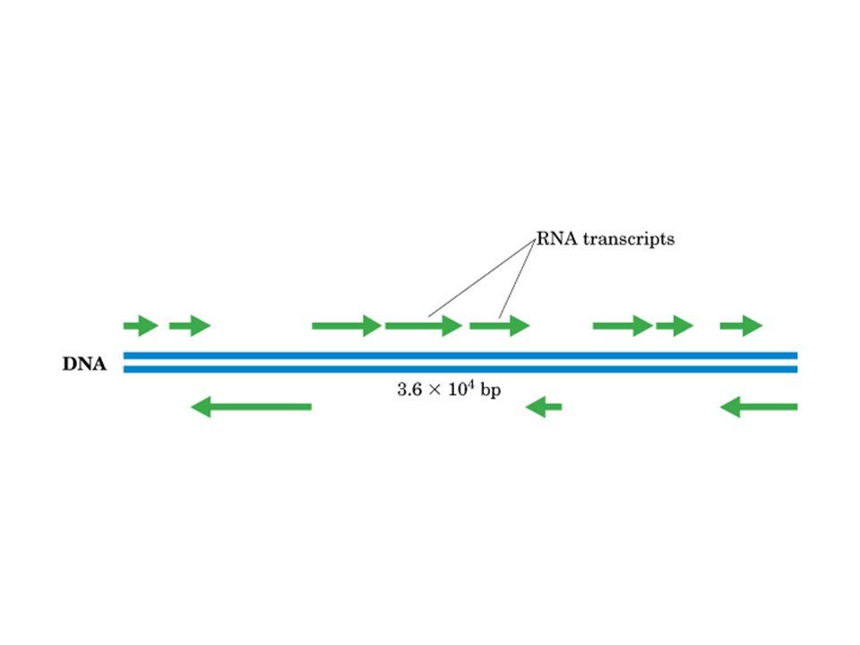 Inhibe la unión del aa-tRNA al ribosoma