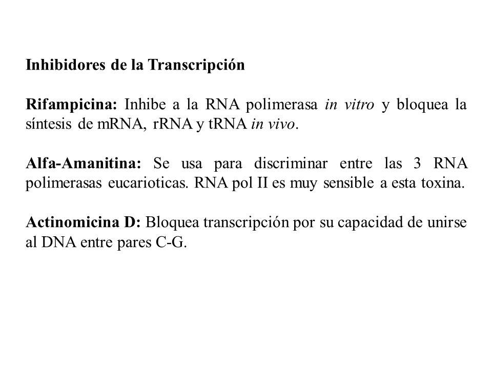 Inhibidores de la Transcripción Rifampicina: Inhibe a la RNA polimerasa in vitro y bloquea la síntesis de mRNA, rRNA y tRNA in vivo. Alfa-Amanitina: S