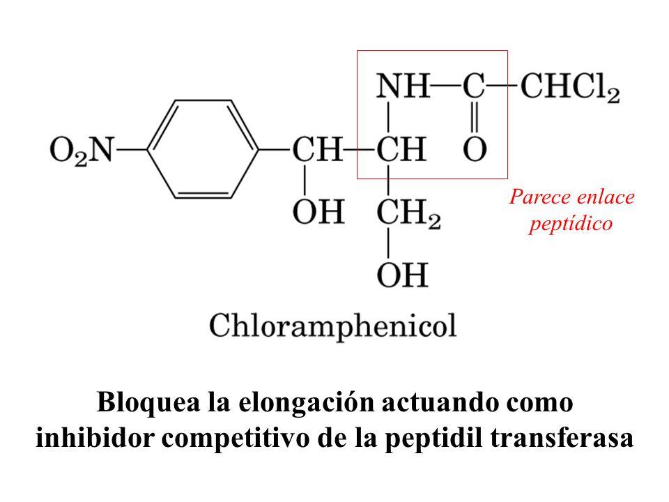 Bloquea la elongación actuando como inhibidor competitivo de la peptidil transferasa Parece enlace peptídico