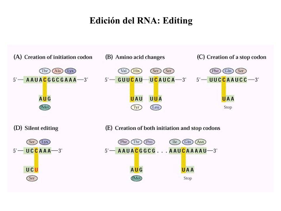 Edición del RNA: Editing