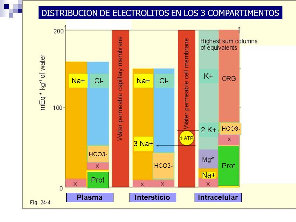 DISTRIBUCION DE ELECTROLITOS EN LOS 3 COMPARTIMENTOS Cl- Na+ Cl- Na+ 3 Na+ Na+ HCO3- PlasmaIntersticioIntracelular K+ 2 K+ HCO3- Prot