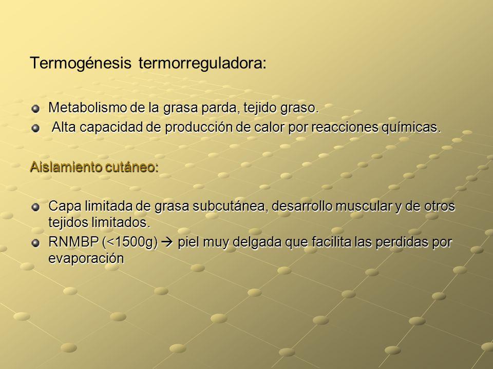 Termogénesis termorreguladora: Metabolismo de la grasa parda, tejido graso. Alta capacidad de producción de calor por reacciones químicas. Alta capaci