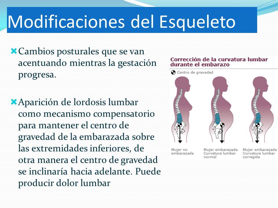 Modificaciones del Esqueleto Cambios posturales que se van acentuando mientras la gestación progresa. Aparición de lordosis lumbar como mecanismo comp