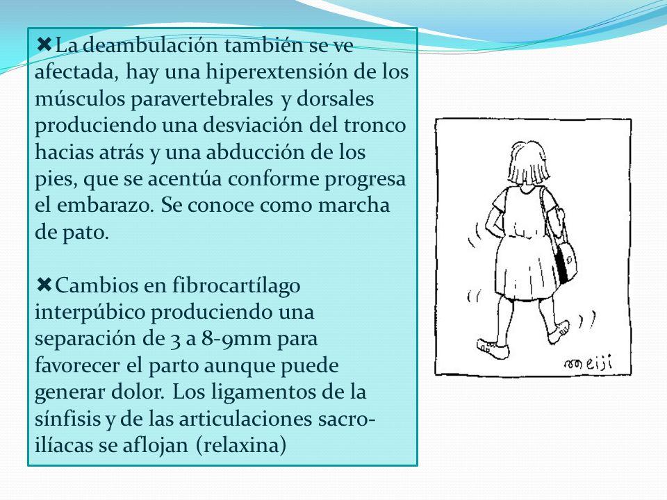La deambulación también se ve afectada, hay una hiperextensión de los músculos paravertebrales y dorsales produciendo una desviación del tronco hacias