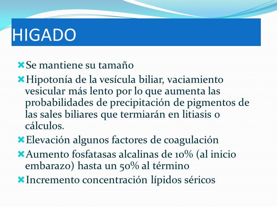 HIGADO Se mantiene su tamaño Hipotonía de la vesícula biliar, vaciamiento vesicular más lento por lo que aumenta las probabilidades de precipitación d