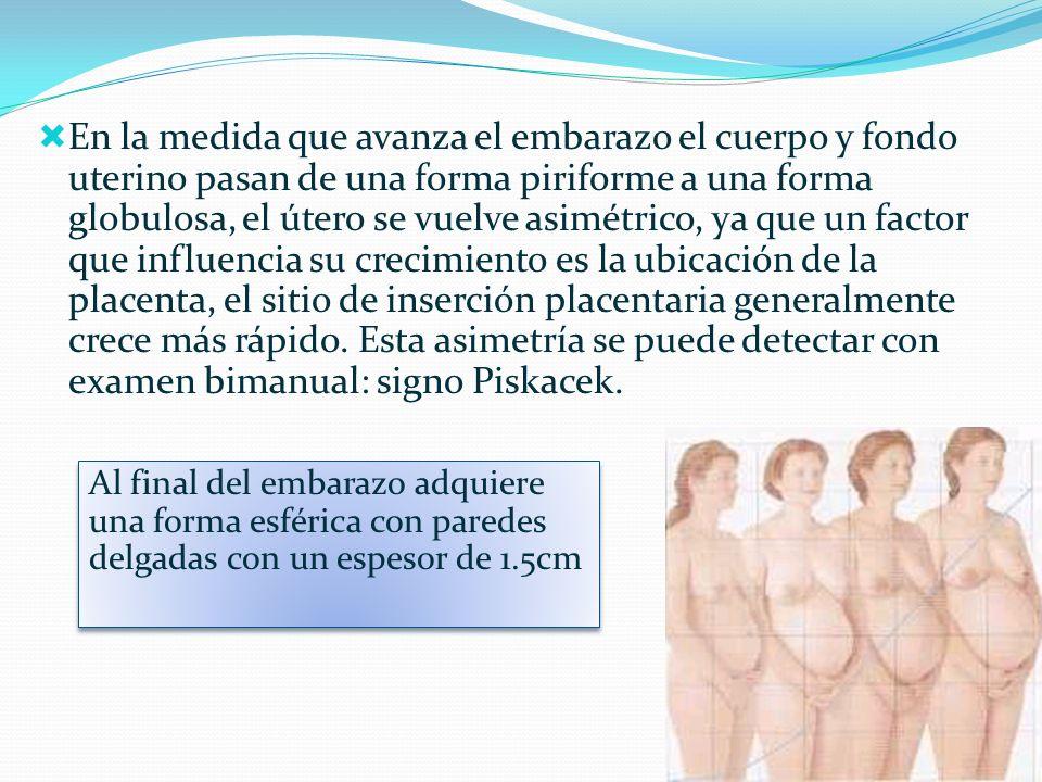 En la medida que avanza el embarazo el cuerpo y fondo uterino pasan de una forma piriforme a una forma globulosa, el útero se vuelve asimétrico, ya qu