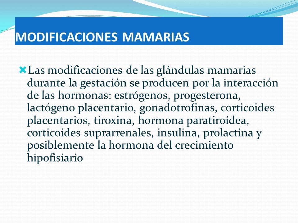 MODIFICACIONES MAMARIAS Las modificaciones de las glándulas mamarias durante la gestación se producen por la interacción de las hormonas: estrógenos,